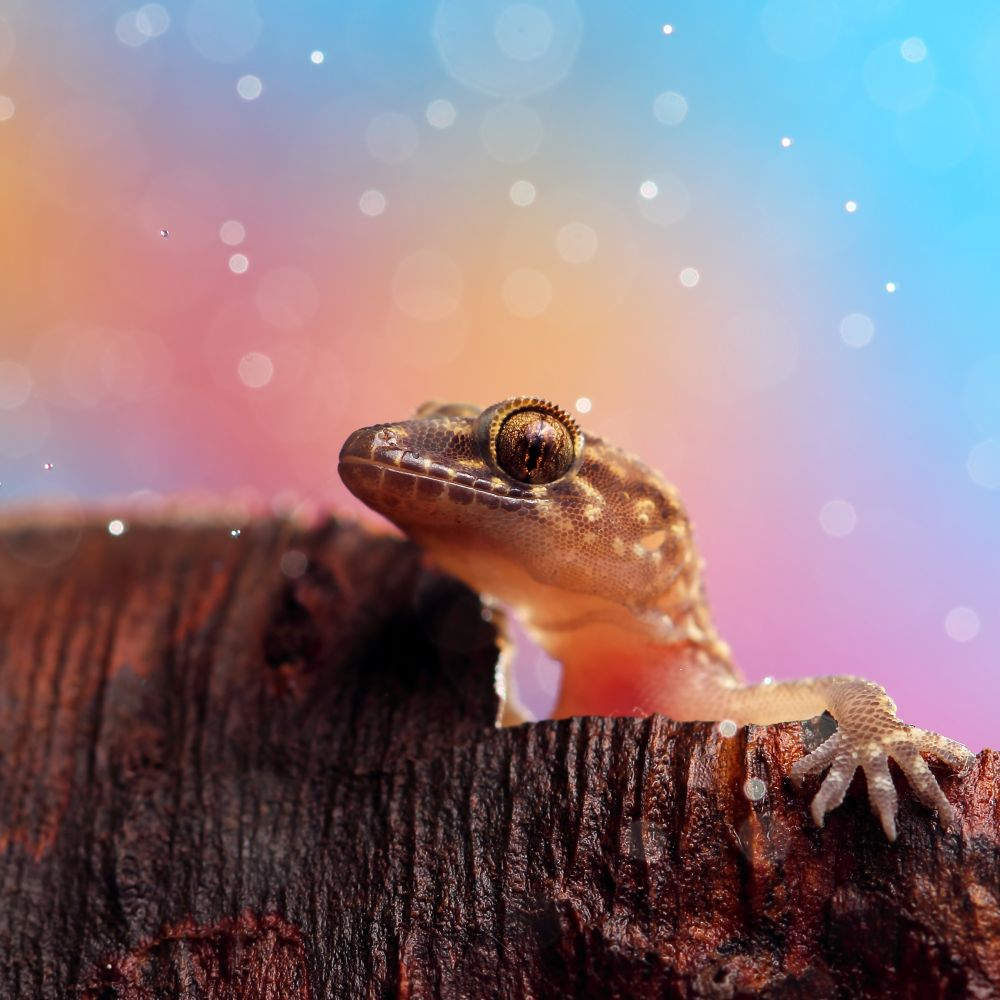 Plastic bags and colourful flowers helped me create a dreamy background behind this cruious gecko. Exposure: 1/200sec at f/5.6 (ISO 100). Photograph/Nadav Bagim