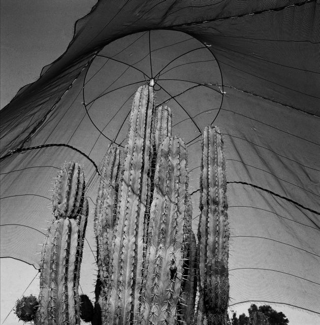 Photograph/Graciela Iturbide.