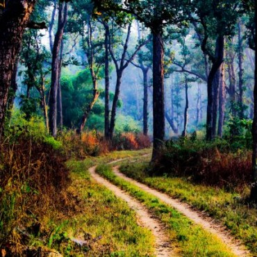 """It is an absolute pleasure driving through the forests of Kanha National Park, Madhya Pradesh, thick with fragrant Sal trees. This particular photograph was made one early morning while I was intently waiting for a tiger sighting."" Photograph/Kunal Gupta"