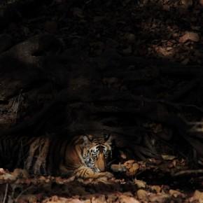Photograph/Harsh Nagpal