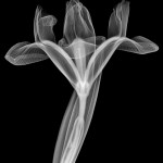 To get crisp images, he has to expose his subjects to almost 12 minutes of radiation. Photograph/Nick Veasey