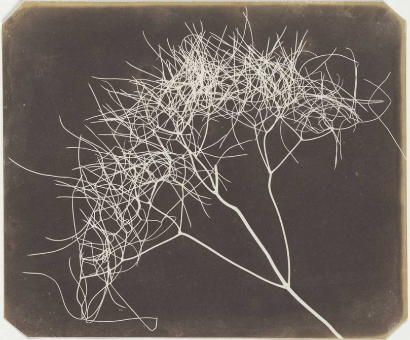 What Fox Talbot Could Have Done With >> The Life And Works Of Henry Fox Talbot Better Photography