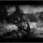 Photograph/Giacomo Brunelli