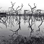 Dead mangrove trees stand in front of an oil refinery in Kochi. With rapid industrialisation, there are a multiplicity of reasons as to why various kinds of flora are dying out at the fringes of the coasts. Photograph/Selvaprakash Lakshmanan