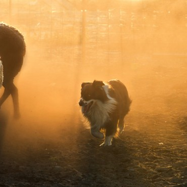 Overall Dog Photographer of the Year 2014 winner and Dogs at Work winner. Steph Gibson/The Kennel Club©