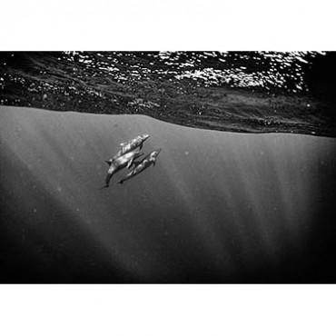 Photograph/Anuar Patjane