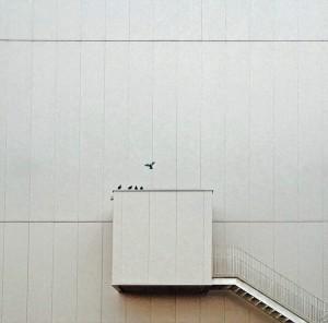 Photograph/João Bernardino