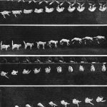 Falling cat (1894). The cat was part of Marey's famous study to prove that the animal always landed on its feet. He tried the same with a chicken and a dog, and achieved similar results. Photograph/Étienne-Jules Marey