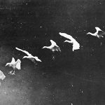 Flapping herons (1886). Marey went on to create a drum containing ten models of the motion of a flying bird in respective phases. By rotating the drum, viewers received a perfect illusion of the bird's flight. Photograph/Étienne-Jules Marey