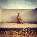 Photograph/Mitul Kajaria