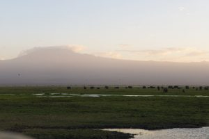 Mt. Kilimanjaro with Elephants in the foregeround. Photograph/Sakshi Parikh