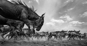 Photograph/Anup Shah