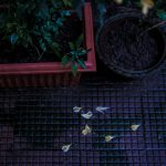 Not Autumn. Photograph/Anurag Banerjee