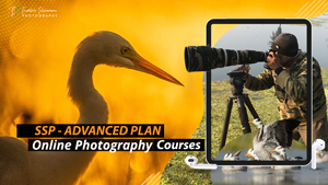 Online Photography Courses - Advanced Plan