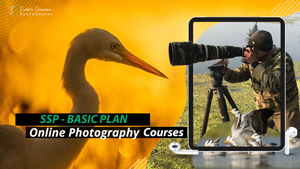 Online Photography Courses - Basic Plan