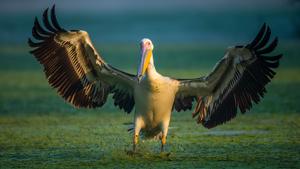 Bird Photography Practical Field Guide